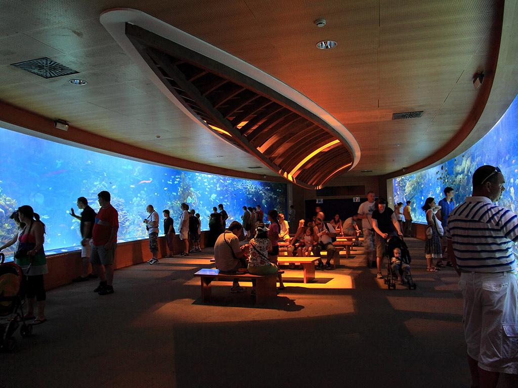Hemisfèric, Museo de las Ciencias Príncipe Felipe y Oceanogràfic