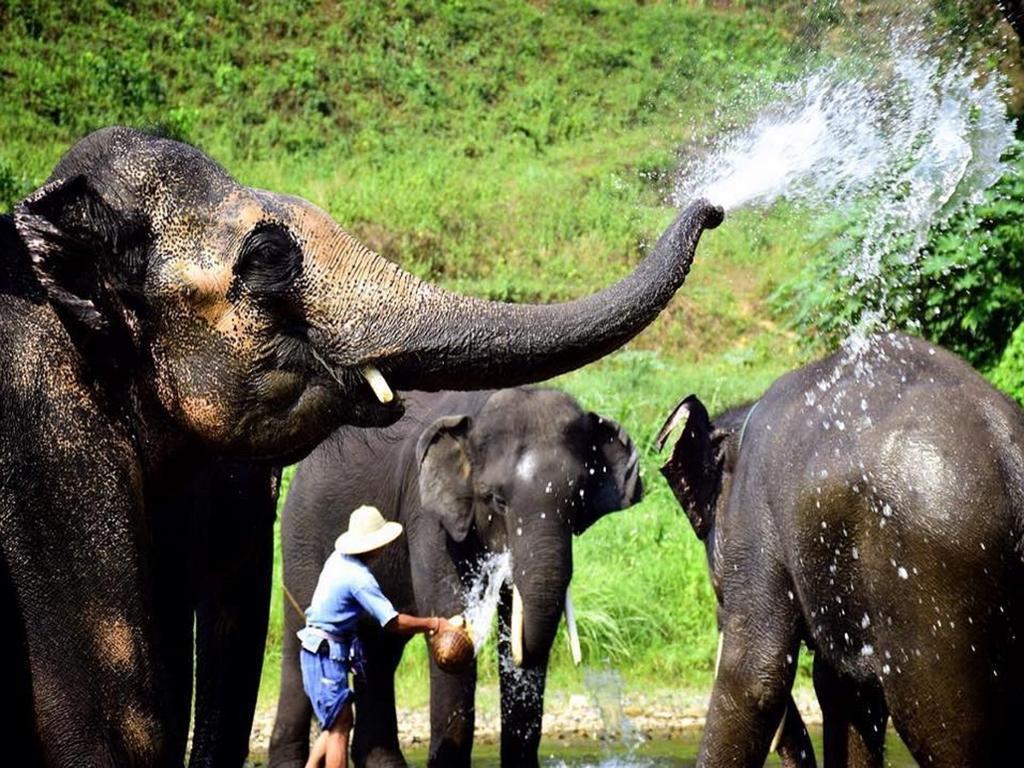 Bangkok + Chiang Mai + Phuket (incluye Excursión a los Elefantes )