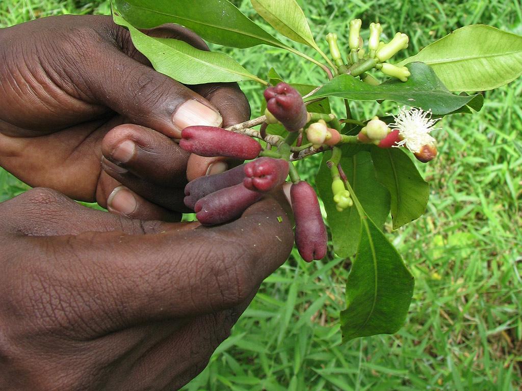 Descubre las especias de Zanzíbar