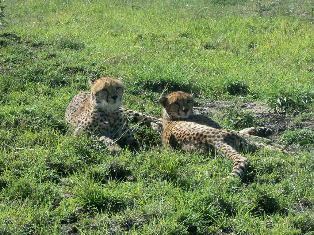 Nairobi National Park Tour and Baby Elephants