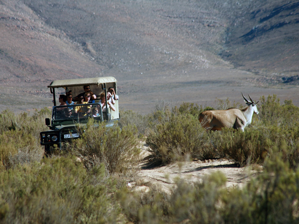 Safari de vida silvestre