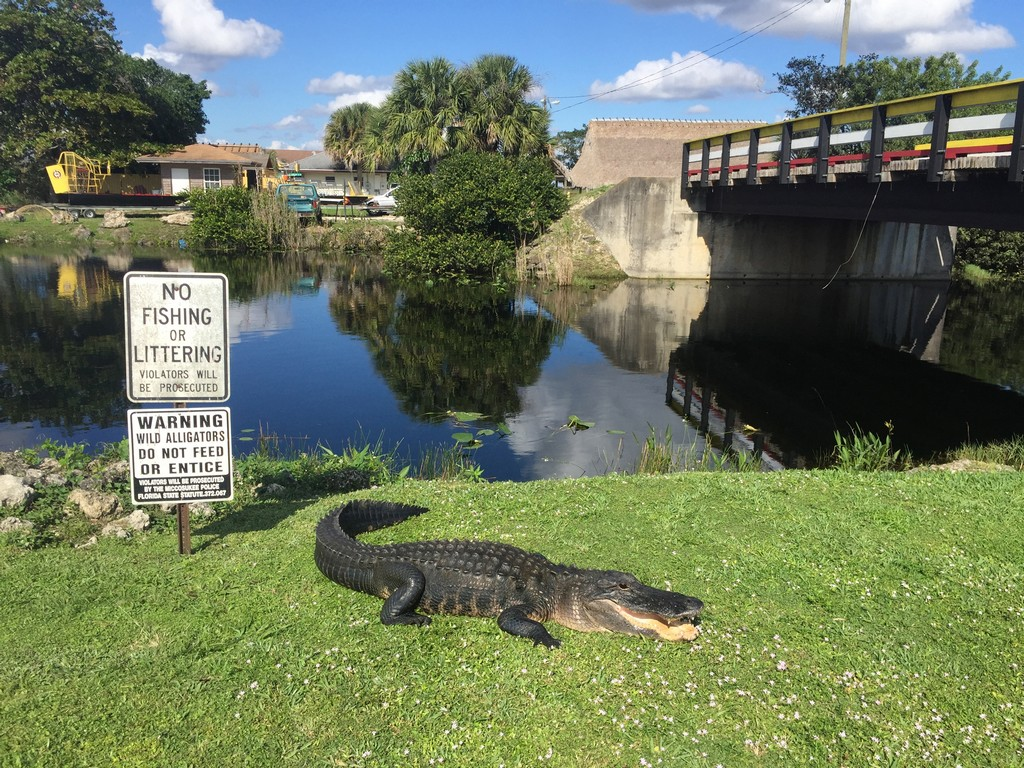 City Tour, Everglades and Biscayne Boat Tour