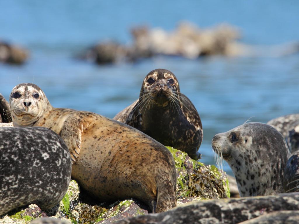 Safari por el mar - con traslados