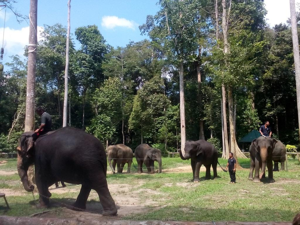 Nursing with Love at an Elephant Sanctuary and Aborigines Village