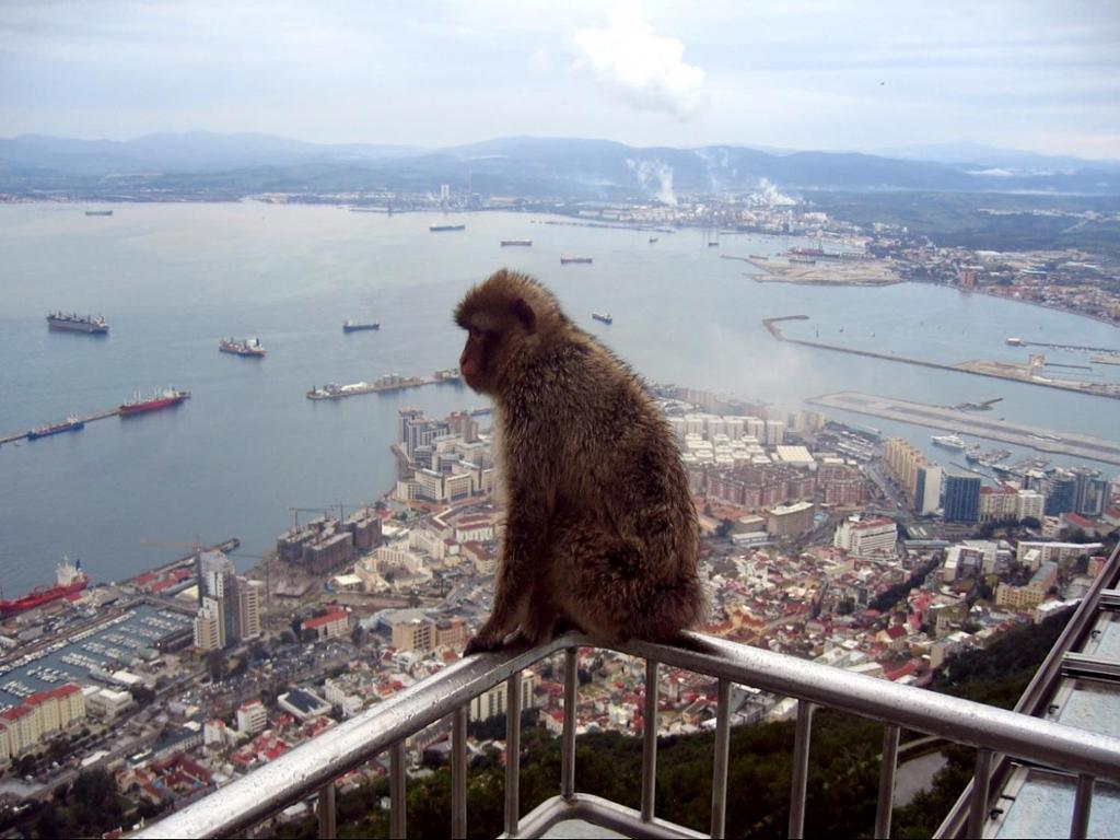 Gibraltar Express - Sightseeing Full Day